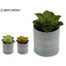 flowerpot plant leaf shape small colors 3 times s