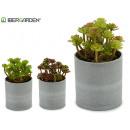 flowerpot plant flower small colors 3 times assort