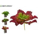foglie delle piante ondulate di grandi colori 3 vo