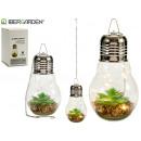 wholesale Illuminants: terrarium bulb 10led echeveria chain