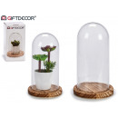 medium narrow wood base glass dome
