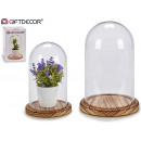 medium wood base glass dome