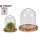 wood base glass dome