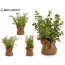 white sack branches plant, 4 times assorted