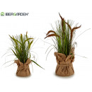 small white sack reed plant, 2 times assorted