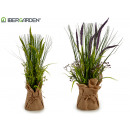 plant reeds and branches large sack, 2 times assor