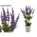 groothandel Home & Living: lavendel met gestreepte pot