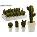 white pot cactus gr, 4 times assorted