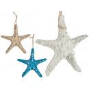 étoile de mer moyenne en polyrésine, 3 fois couleu