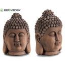 natürlicher Buddha-Kopf mittleren Alters