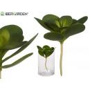 runde Blattpflanze