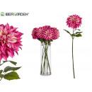 großer lila Dahlienblumenzweig