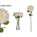 großer weißer Dahlienblumenzweig