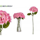 pink big hydrangea flower branch