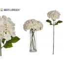 weißer großer Hortensienblumenzweig