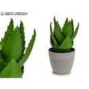 pot plant aloe vera large