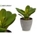 pot plant round leaf