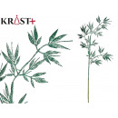 wholesale Beverages: branch with shiny leaves 84 cm green