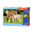 120 Puzzle éléments: Poneys dans la prairie