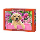 Puzzle 500 items Labrador Puppy in Pink Box