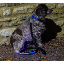 IA LED Light Up Pet Leads - Hundeleine - Blau