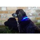 IA LED Light Up Pet Collar - Dog Collar - S / M