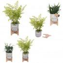 grossiste Jardin et bricolage: plante artificielle pot ciment a message, ...