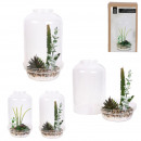 terrarium decoratif, 2-fois assorti