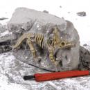 Mini Excavation Game