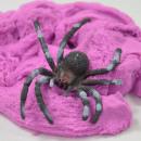 Spinnensand, mit Spinne, 80g, 5 Farben sortiert, i