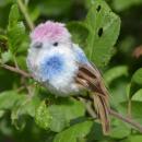 Clipsies, dekoratív madár csipesszel, 3- szer szor