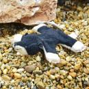Pillitaps mol Mola, 8cm