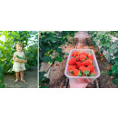 Greenhouse greenhouse with steel foundation 6m2 to