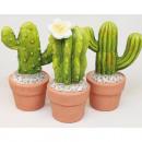 Cactus XL 14x6cm including plant pot, 3-fold sort