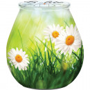 wholesale Candles & Candleholder: Candle in glass 9,3x10cm with daisies