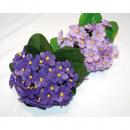 wholesale Decoration: Violet Bouquet LUXURY with approx. 30 flowers