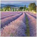 Servietten Premium 20er 33x33cm 3-lagig Lavendel