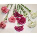 Bouquet d'oeillets XL 67x18cm à 5 têtes