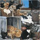 CS Company of Cats kártya