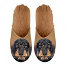 Slipper Dachshund 35-38
