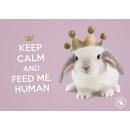 wholesale Home & Living: Placemat Studio Pets Rabbit