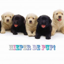 square kártya Hieper A Pup!
