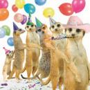 Szögletes Card Meerkats Conga