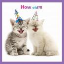 Szögletes Card kiscicák Nevess Yourself