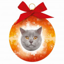 Christmas ball British Shorthair Cat