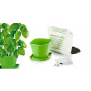 Herb cultivation set SENSE, basil
