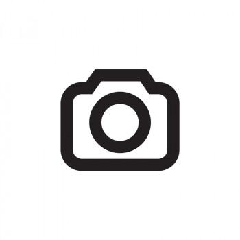 Bull Skull Light Grey 45 x 45 Gray