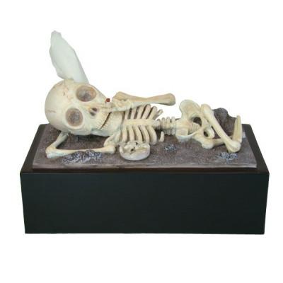 https://evdo8pe.cloudimg.io/s/resizeinbox/130x130/https://1667947478.rsc.cdn77.org/content/images/thumbs/002/0027137_Rotary%20Hero_rotary-hero-skelet-tissue-box-cover_4942079122527.jpeg