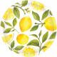 8 Tányér citrom LC papír 27cm
