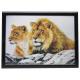 3D Bild Löwen ca. 50 x 70 cm